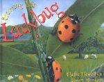 Starting Life: Ladybug