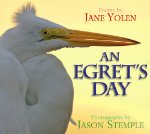 An Egret's Day