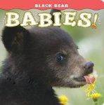 Black Bear Babies!