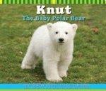 Knut: The Baby Polar Bear
